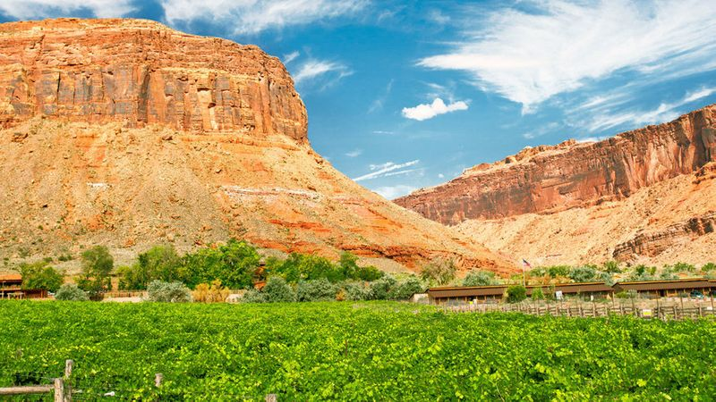 Rows vines in front of the red rock mountains in Moab