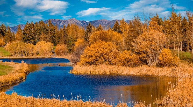 Fall color around Mammoth Lake in California, one of the best places for fall color in the Eastern Sierras
