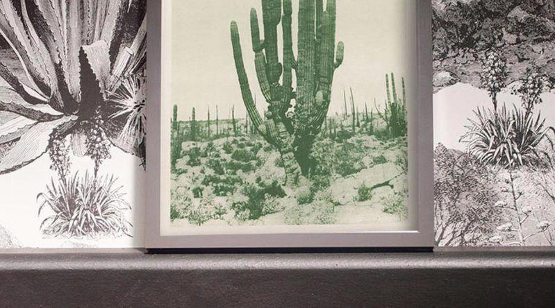 Adopt Saguaro Style