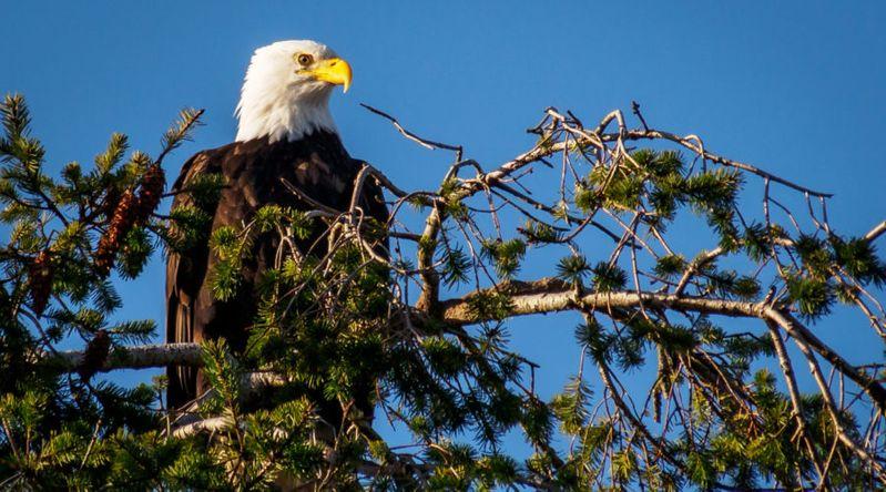George C. Reifel Migratory Bird Sanctuary, Vancouver, B.C.