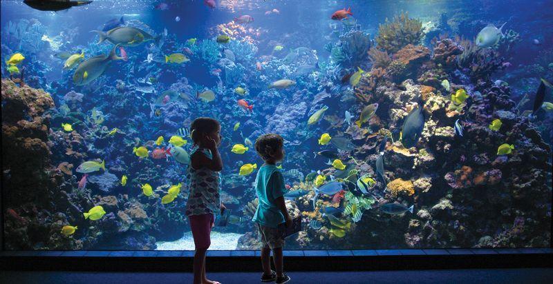 Maui: Marine Life