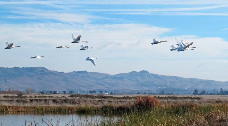 Birds flying across the Napa-Sonoma Marshes Wildlife Area on California wine country tours