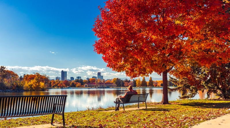 Man sitting on bench at park in front of lake with red elm trees in Denver, one of the best places for fall foliage in the city,