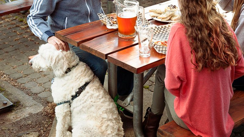 dog-friendly travel at lucky dog brewing