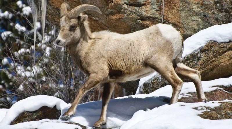 Snap Photos in Rocky Mountain National Park