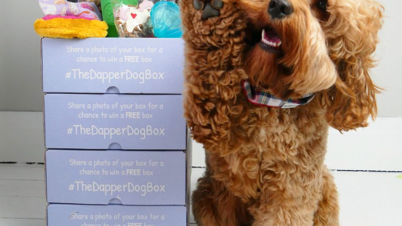 The Dapper Dog Box Subscription