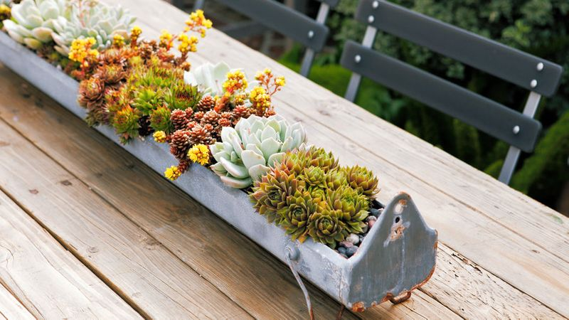 Succulent Container Designs To Win Major Style Points
