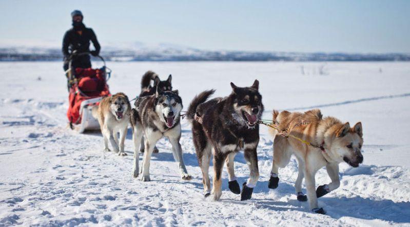 Dog Sled in Denali