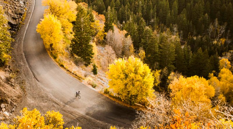 Overhead shot of cyclist cruising down a road surrounded by golden aspens in one of the best places for fall foliage