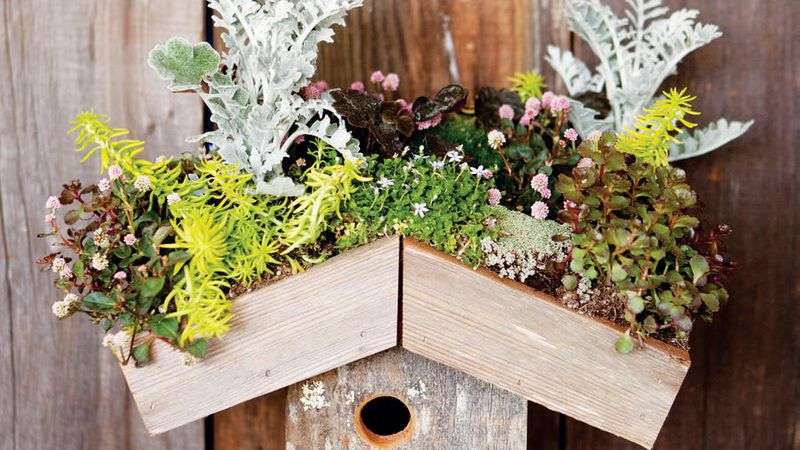 Small Space Gardening How To Garden Anywhere Sunset