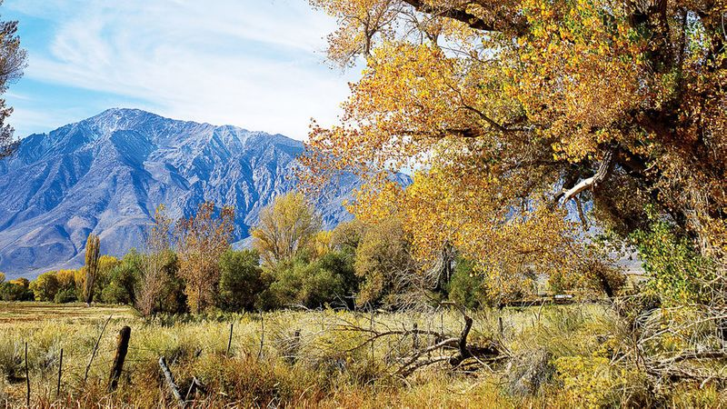 Fall color in Conway Summer in the California Sierra Nevada