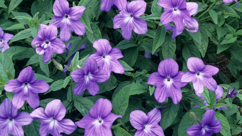 Shade Plants Make Low Light Gardens Pop With Color Sunset