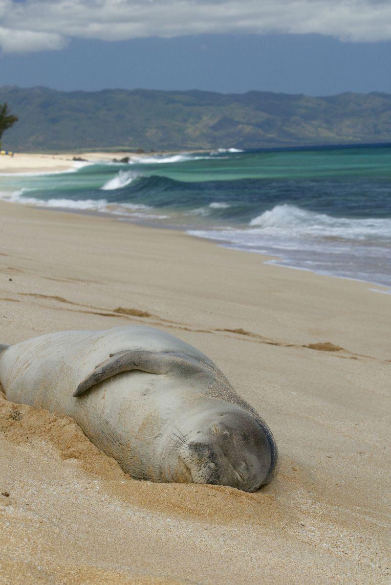 Oahu: Superb Shoreline