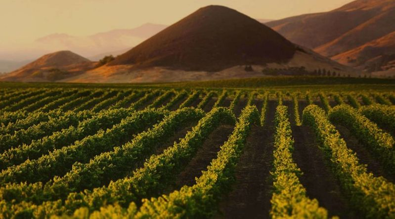 Vineyards with Islay Peak, a volcanic plug, in the background in California's secret wine country of Edna Valley