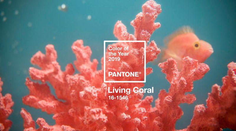 Meet Living Coral