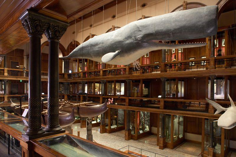 Oahu: Must-See Museum