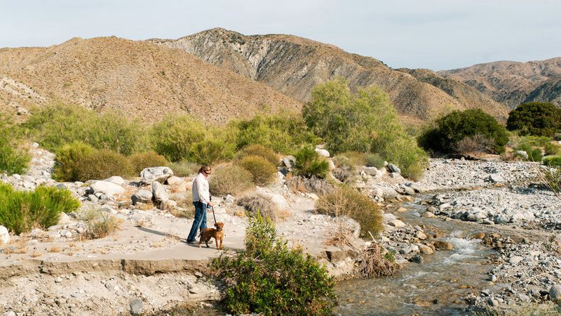 Person hiking with dog at Mission Creek Preserve, one of the best hikes in California
