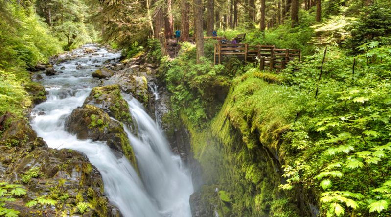 Cascading Waterfalls at Olympic National Park, WA