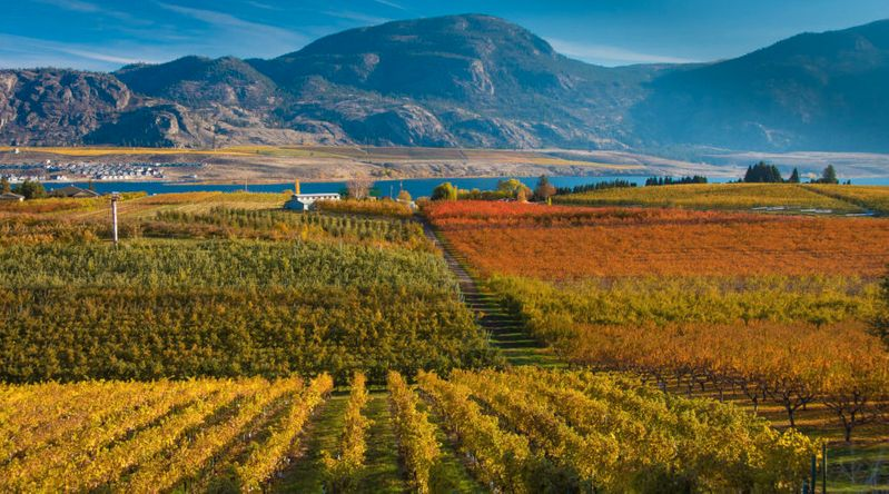 Vineyards in front of Osoyoos Lake in Okanagan Valley B.C. wine country