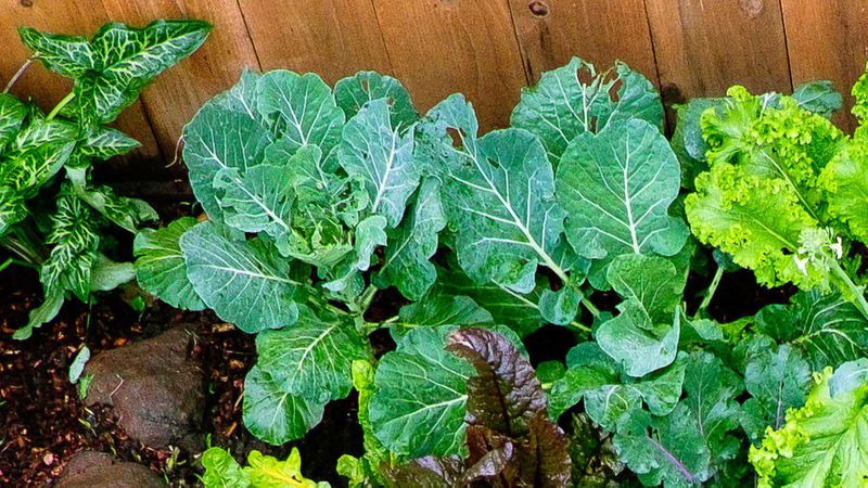 growing winter vegetables