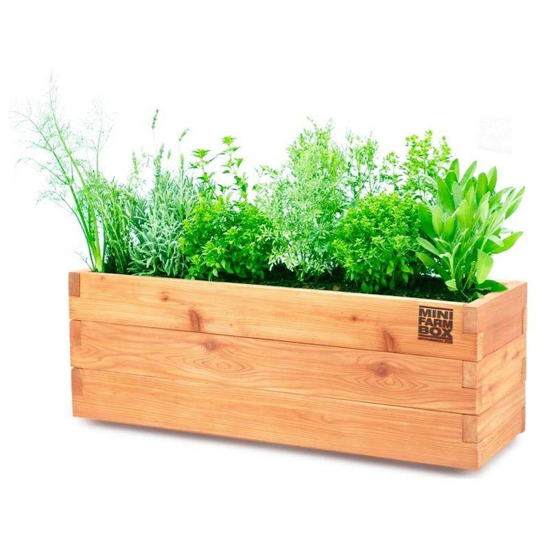 Container Garden #Goals