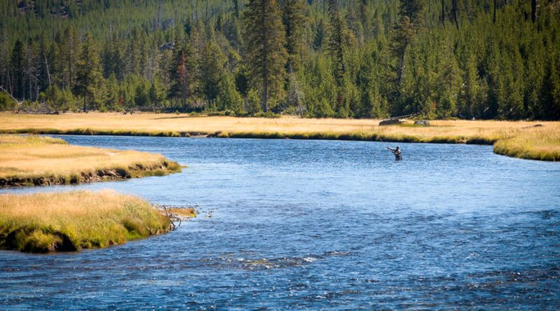 Man fly flishing on the Yellowstone River in Yellowstone National Park
