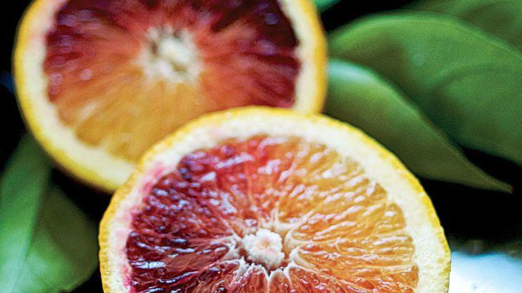 growing citrus