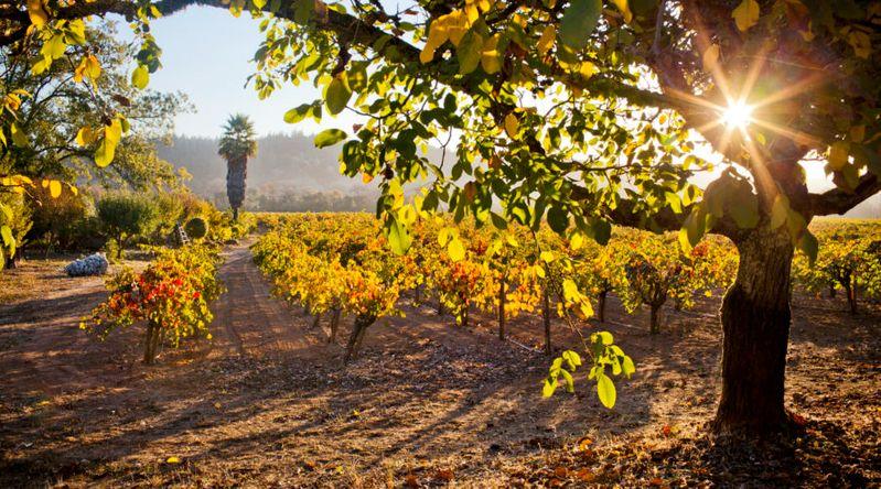 Go on a Grape Escapade in California Wine Country