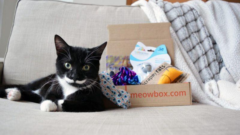 Meowbox Subscription