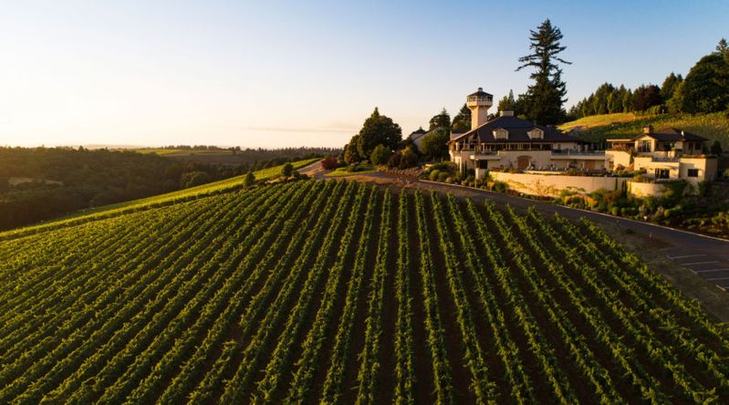 The fields during the winery harvest at Willamette Valley Vineyards