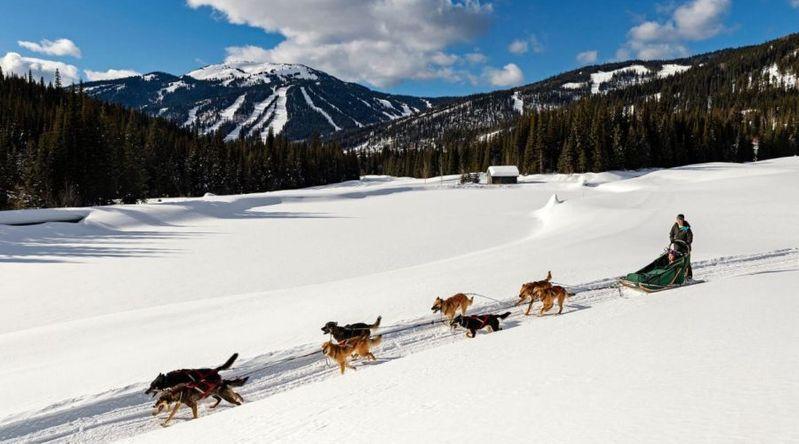 Dog sledding through the snow at Sun Peaks resort in British Columbia