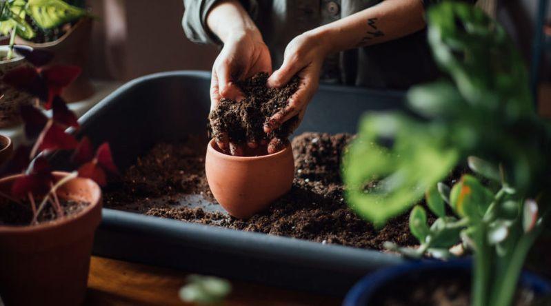 hand creams for gardeners