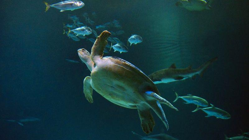 Best Animal Attraction: Shark Reef Aquarium at Mandalay Bay