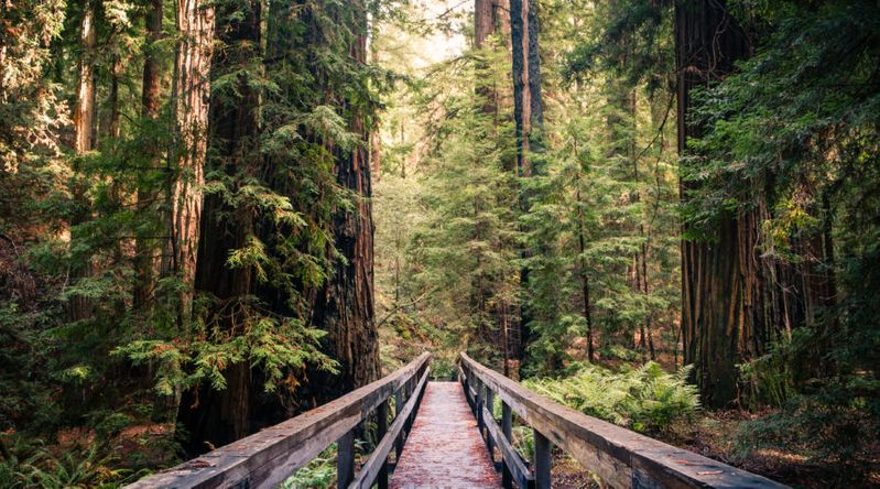 Hiking trail among the redwood giants in Montgomery Woods State Natural Reserve