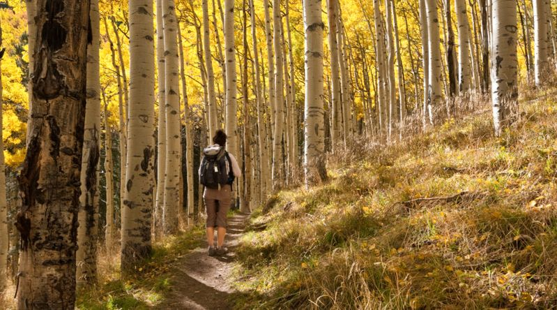 Woman Hiking Through Aspen Trees in the Fall at Coconino National Forest, Arizona, one of the best places for fall foliage in Arizona