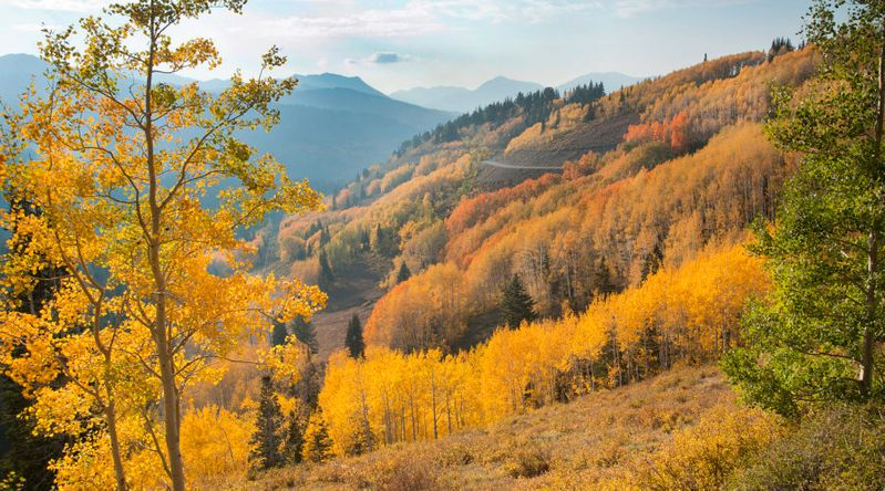 Big Cottonwood Canyon near Guardsman Pass, one of the great fall hikes near Park City, Utah in the Wasatch Mountains