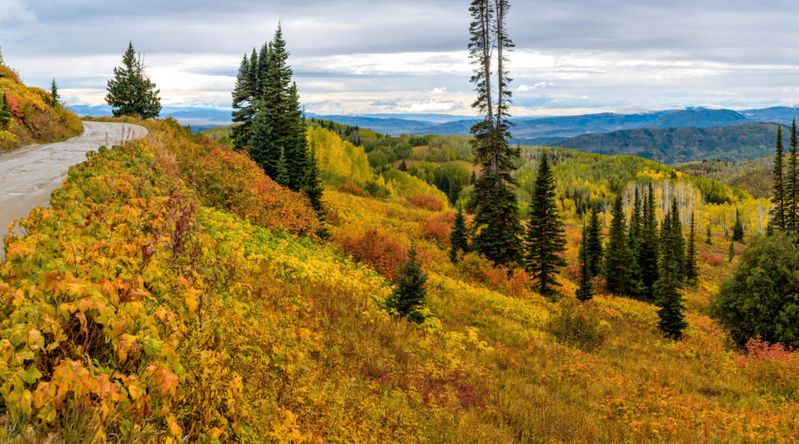 Best fall color in Colorado at Autumn Mountain at Buffalo Pass, near Steamboat Springs.
