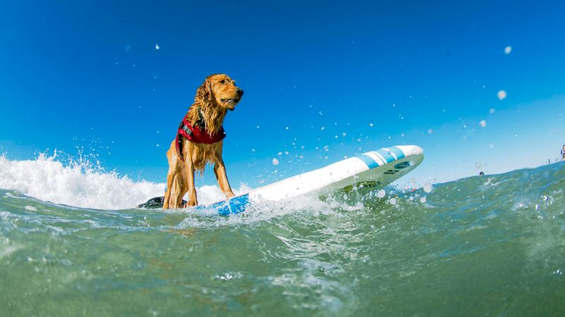 Best Dog Friendly Vacations 25 Trips For You And Your