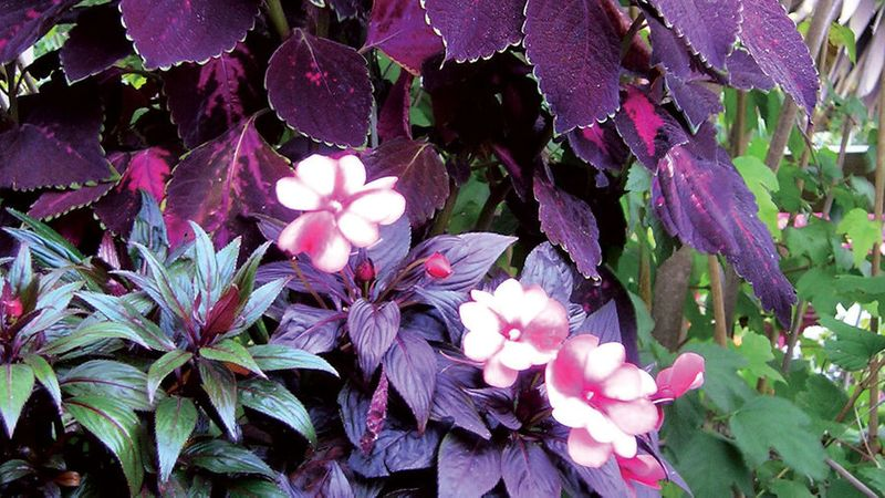 The Best Shade Loving Plants For Containers That Pop Sunset