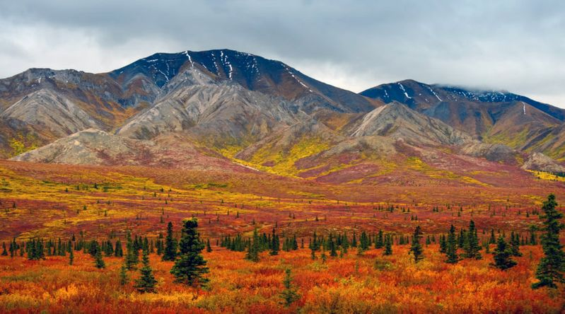 Denali National Park foliage against the mountains