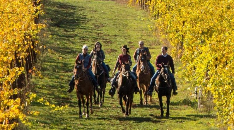 People riding horses through vineyards in one of Oregon's secret wine countries at Winter's Hill Winery in Dundee Hills
