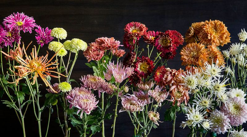 Colorful Cool Season Blooms To Brighten Up The Fall And Winter
