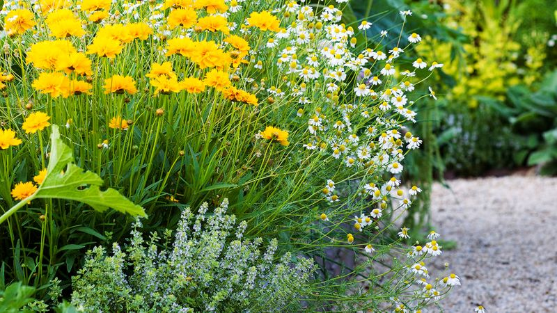 Raised Garden Bed Designs Sunset Magazine