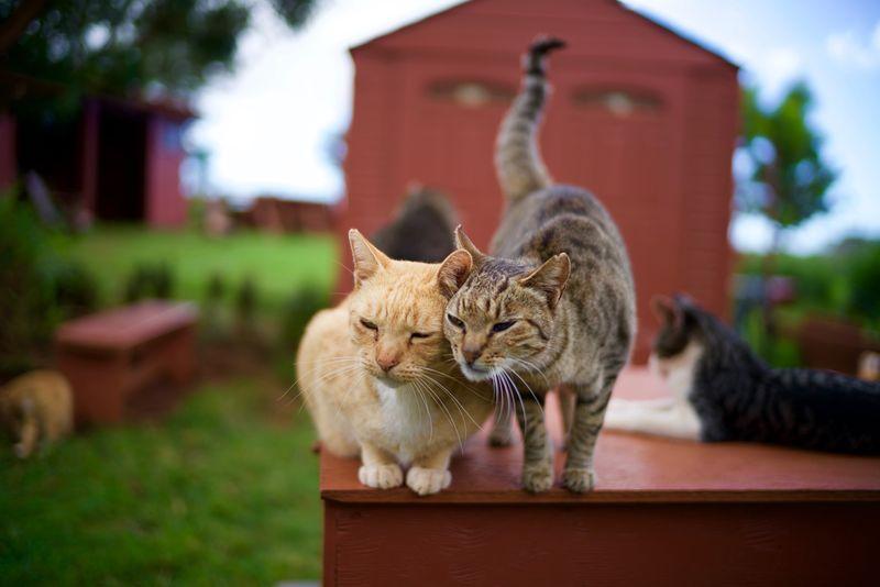 Lanai: Fun with Felines