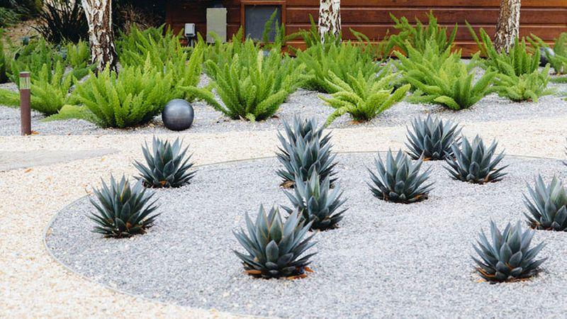 Design With Cactus Sunset Magazine