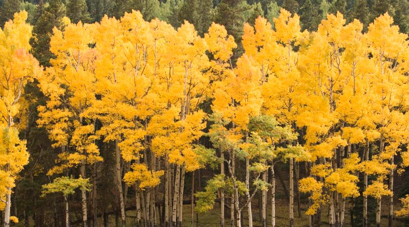 Best fall color in Colorado Rocky Mountain National Park