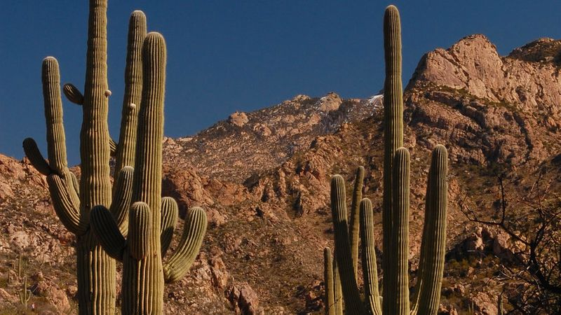 Cacti at Romero Canyon Trail, one of the great fall hikes in Arizona