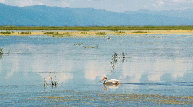 Bear River Migratory Bird Refuge, UT