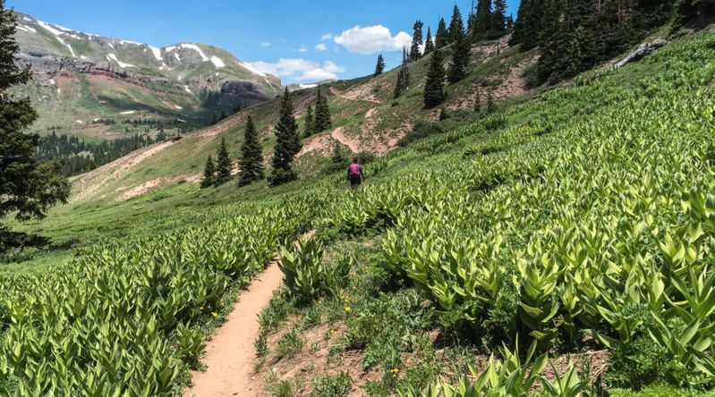 Young Woman Hiker on the Continental Divide Trail in the San Juan National Forest, Colorado