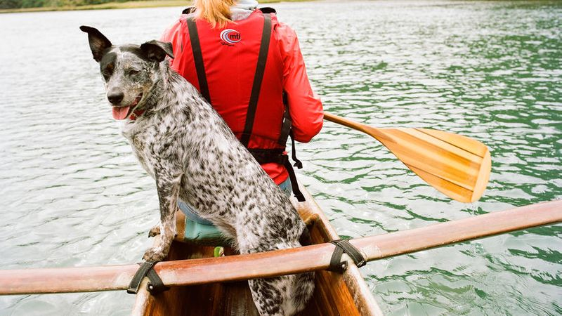 Dog friendly vacations in Mendocino